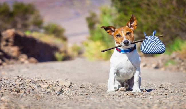 دلایل معمول فرار سگ ها از خانه دام و پت