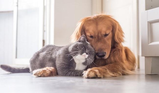 بهترین نژاد های سگ که با گربه ها کنار می آیند