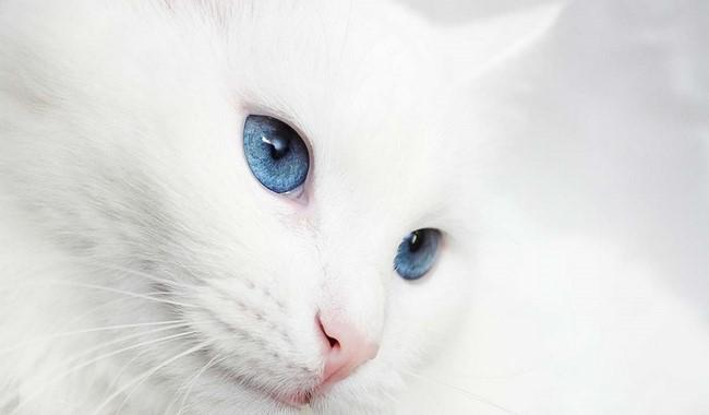 آیا گربه ها افراد را به یاد می آورند؟