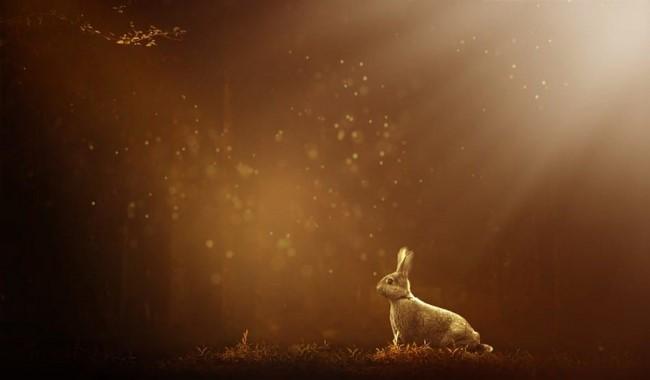 آیا خرگوش ها می توانند در تاریکی ببینند؟ دام و پت