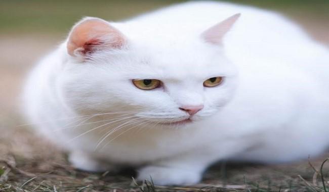 کاوش در حواس شگفت انگیز گربه دام و پت
