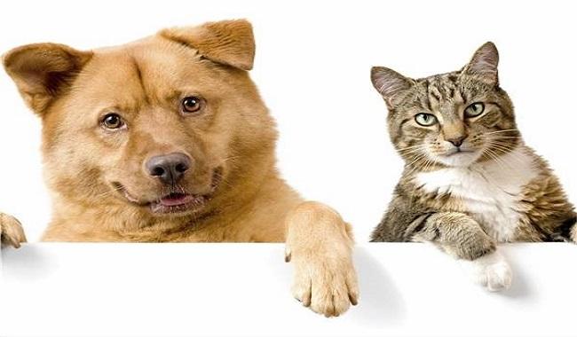 مطالعه ی جدید نشان می دهد که سگ ها بطور قابل توجهی نورون های بیشتری نسبت به گربه ها دارند