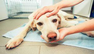علائم هشدار زودرس سرطان حیوان خانگی   دام و پت