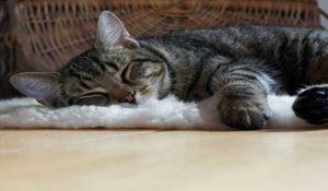 چرا گربه شما شبها میو میو میکند ؟ // دام و پت