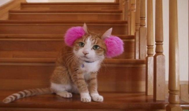 چگونه از گربه ناشنوا خود مراقبت کنیم |دام وپت