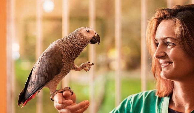 ویژگی و رفتار طوطی ها | دام و پت