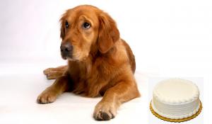 آیا سگ ها می توانند مواد غذایی قند دار بخورند؟ ||دام وپت