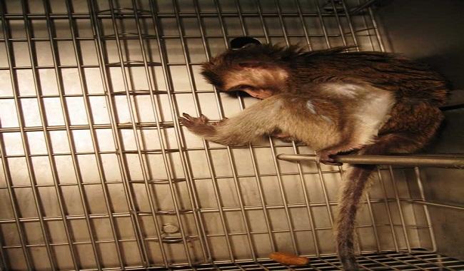 یازده آمار شوکه کننده مربوط به آزمایش حیوانات که درک آنها سخت است. ||دام وپت