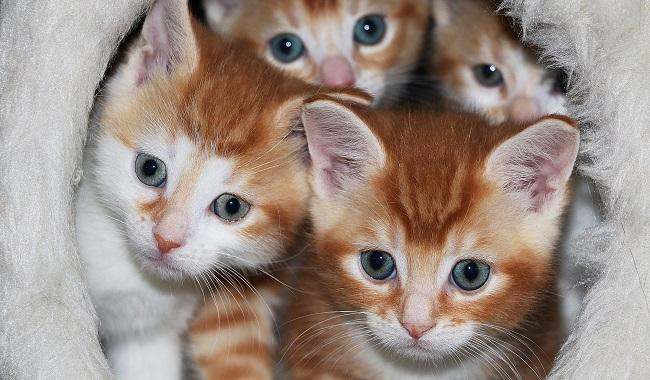 چه زمانی غذای بچه گربه را تغییر بدهیم دام و پت