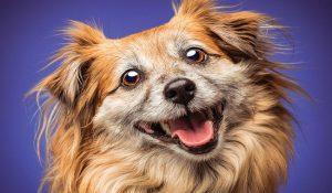 نحوه عکاسی از حیوان خانگی|دام وپت