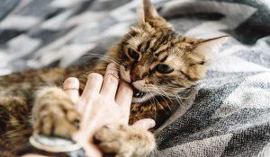 علائم هاری در گربه ها دام وپت