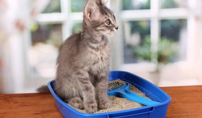 پنج مرحله آسان در مورد نحوه آموزش دست شویی کردن به بچه گربه دام وپت