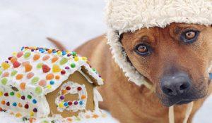 آیا سگ ها مجاز به خوردن مواد قندی و شکر هستند؟|دام وپت