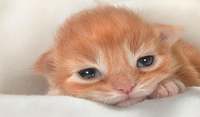 تغییر رنگ چشم بچه گربه ها