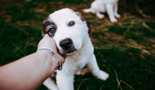 چگونه می توان سگی که ترسیده را آرام کرد دام و پت