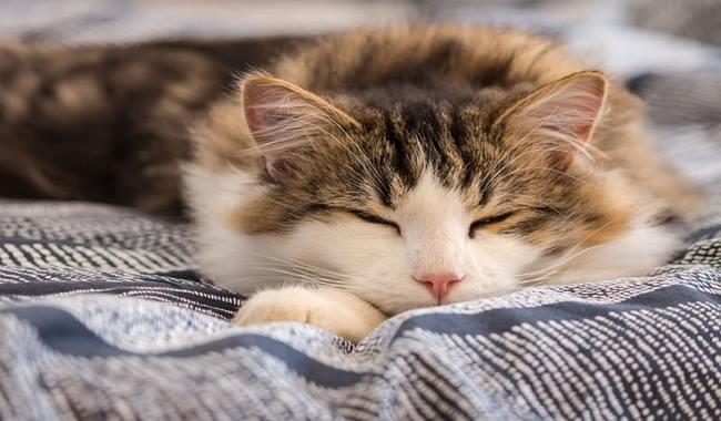 چرا گربه ها روی سینه ی شما می خوابند؟ دام و پت