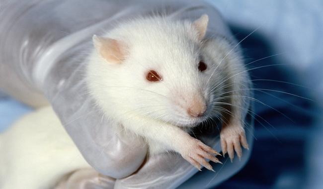 آزمایشات بر روی حیوانات | دام و پت