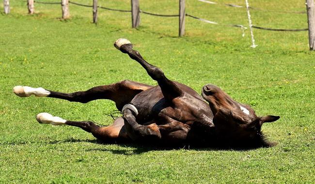 اتانازی اسب | دام و پت