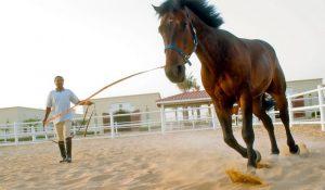 اسب های تراکنر | دام و پت