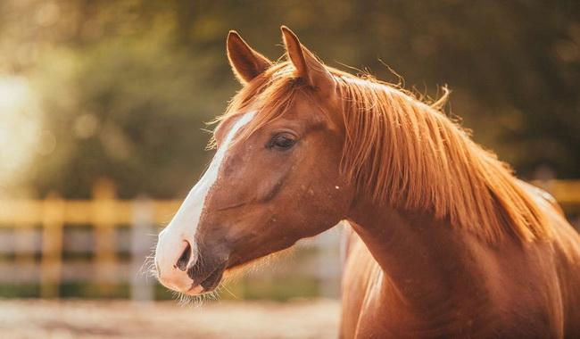 استرس در اسب ها | دام و پت