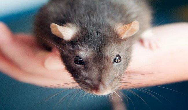 بازی با موش ها | دام و پت