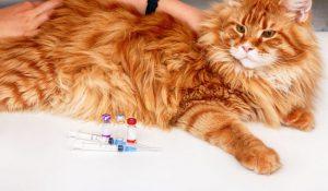 واکسیناسیون در گربه ها   دام و پت