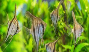 تغذیه ماهی با غذای زنده | دام و پت