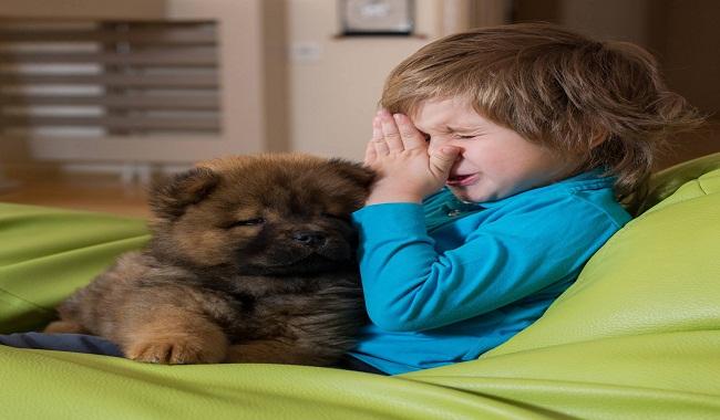 یازده نکته برای کاهش آلرژی به حیوانات |دام وپت