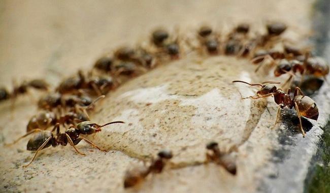 چگونه مورچه ها را بدون سموم بکشیم؟ | دام و پت