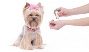 عفونت مثانه در سگ ها | دام و پت