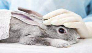 درک رفتار های خرگوش   دام و پت