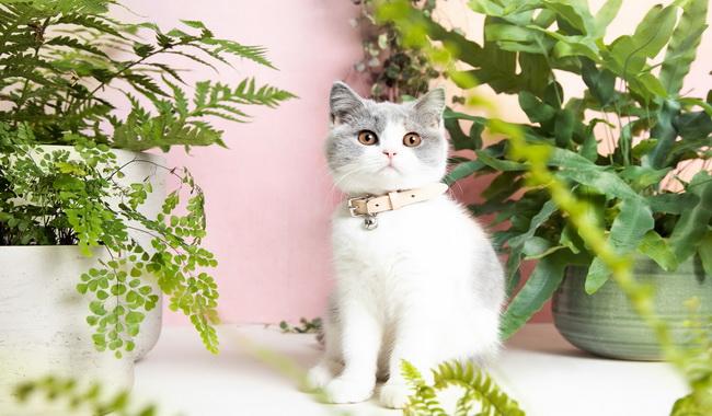 ماه اول ورود گربه به خانه | دام و پت