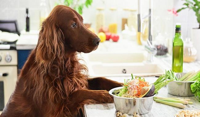28 غذای غیر مجاز در سگ | دام و پت