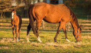 راه های نگهداری از اسب | دام و پت