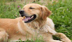 بهترین نژاد سگ ها برای کودکان   دام و پت