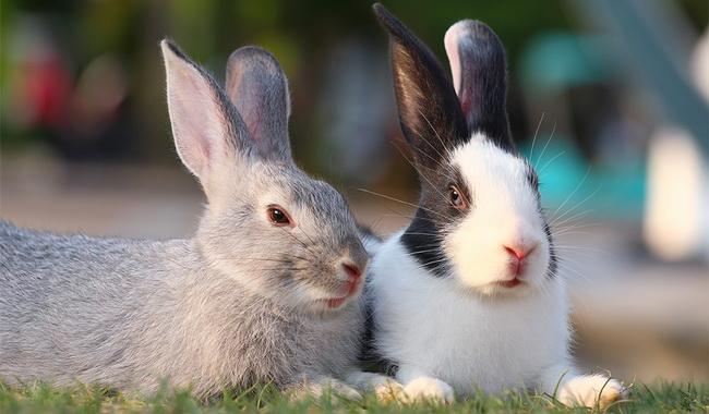 درک رفتار های خرگوش | دام و پت