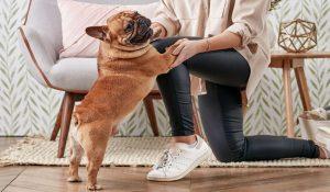 علائم اثبات عشق در سگ | دام و پت