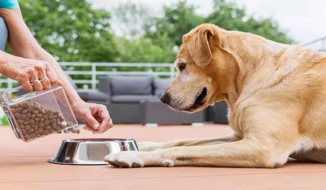 فاصله غذا دادن به سگ | دام و پت