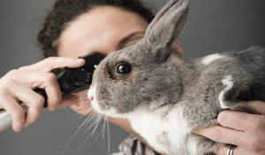 خارش در خرگوش 3 | دام و پت