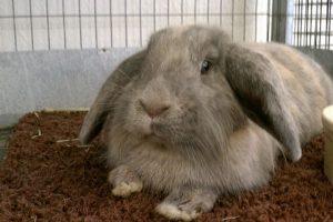 علائم هشدار دهنده مرگ خرگوش   دام و پت