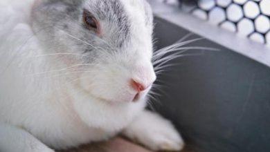 علائم هشدار دهنده مرگ خرگوش | دام و پت