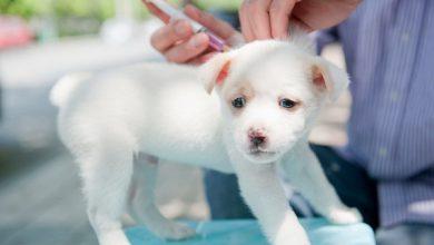 واکسن در توله سگ ها | دام و پت