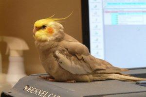 تغییر وزن در پرندگان | دام و پت