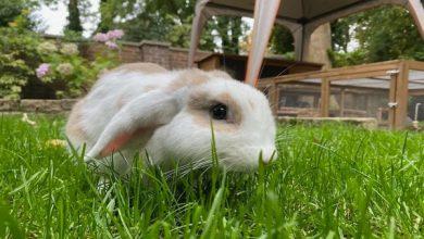 نیازهای غذایی در خرگوش ها   دام و پت