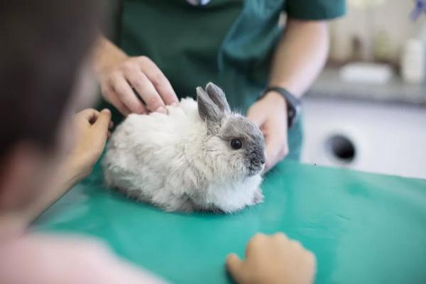 لنگیدن خرگوش 5 | دام و پت