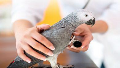 اختلالات گوارشی پرندگان خانگی 5| دام و پت