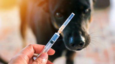 دیابت در حیوانات خانگی | دام و پت