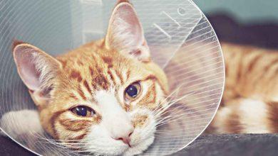 مدیریت درد در حیوانات خانگی | دام و پت