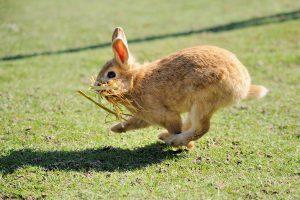 لنگیدن خرگوش 3 | دام و پت