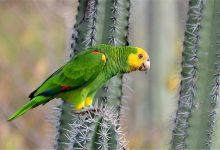 اختلالات تغذیه ای پرندگان خانگی | دام و پت